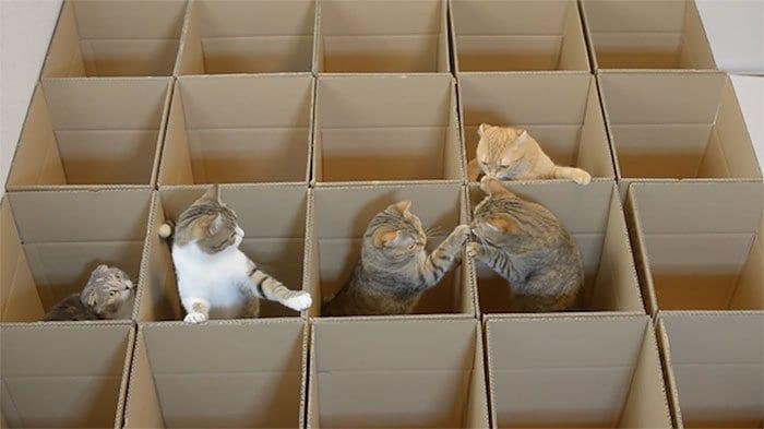 cats maze