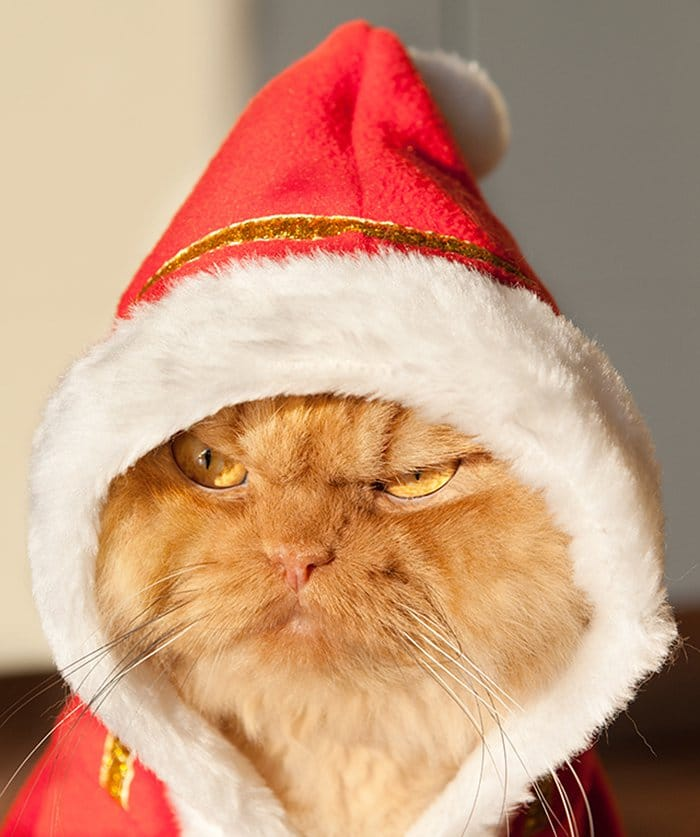 christmas garfi side stare