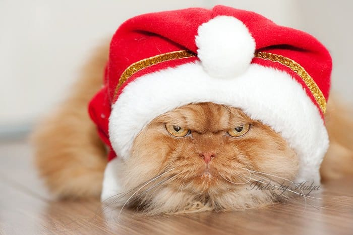 christmas hat garfi