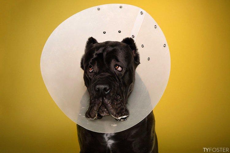 cone-dog-black