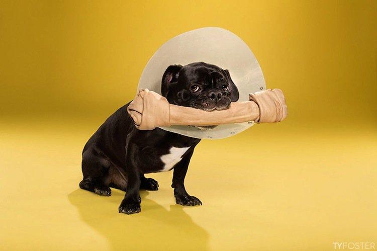 cone-dog-bone