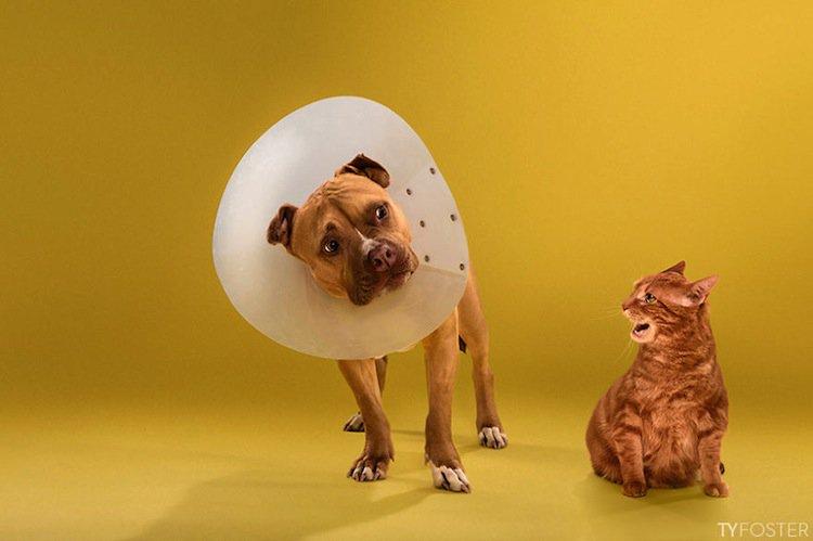 cone-dog-cat-three