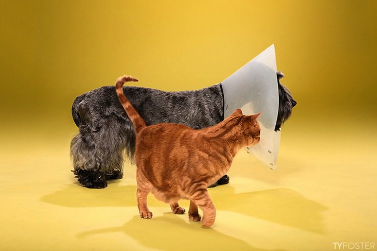 cone-dog-cat-two