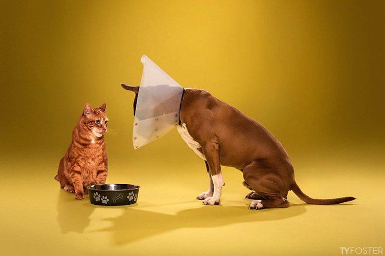 cone-dog-cat