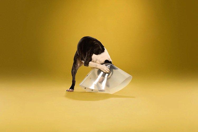 cone-dog-cone