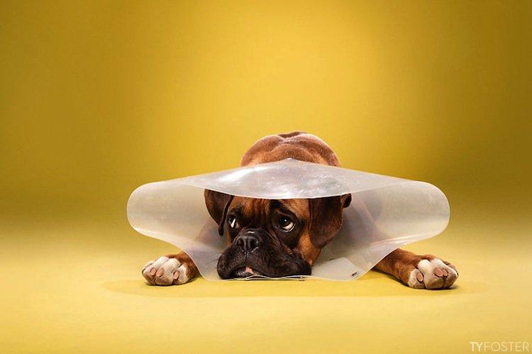 cone-dog-first
