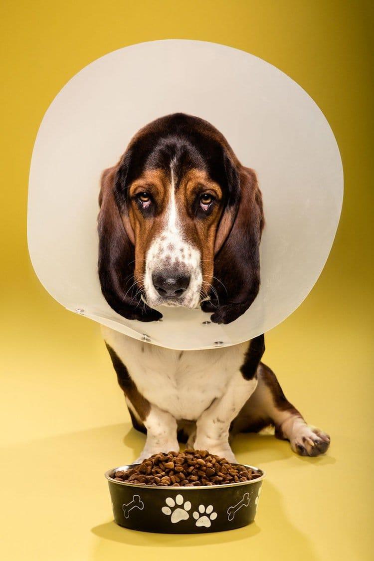 cone-dog-sad