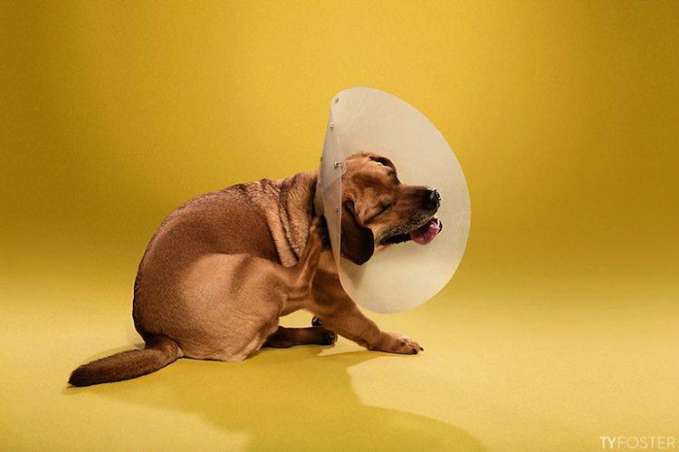 cone-dog-scratch