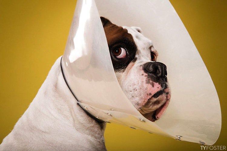 cone-dog-second