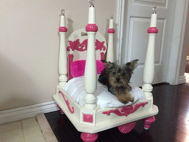 This Dog Owner Turned An Old Side Table Into A Luxury Bed
