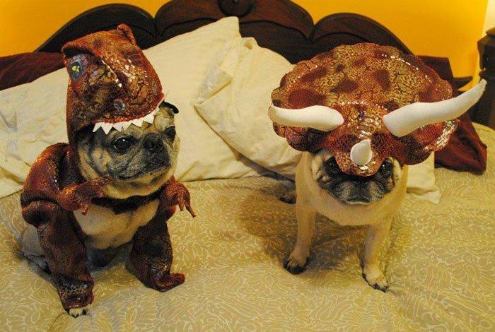 dog-dinosaur