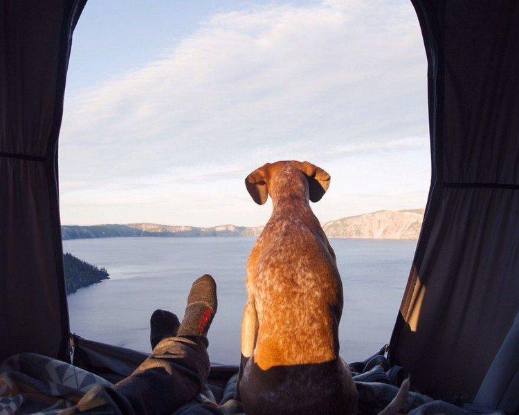 dog feet lake