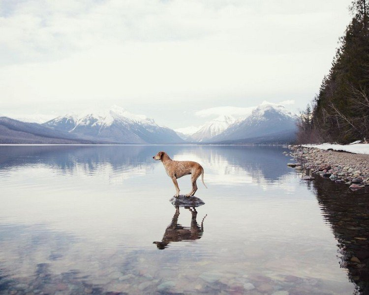 dog lake mountains