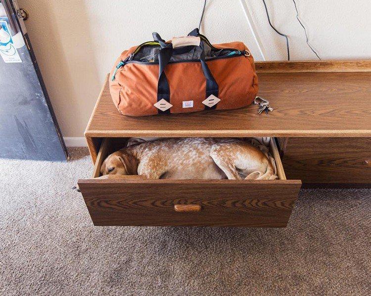 dog sleeping draw bag