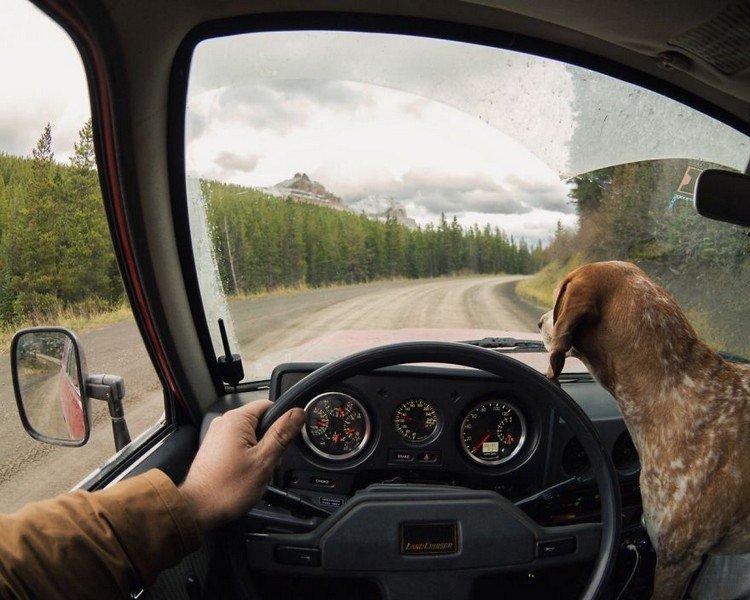 dog steering wheel