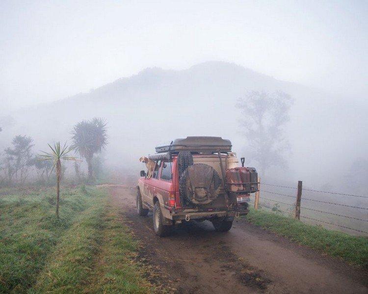 dog vehicle mist