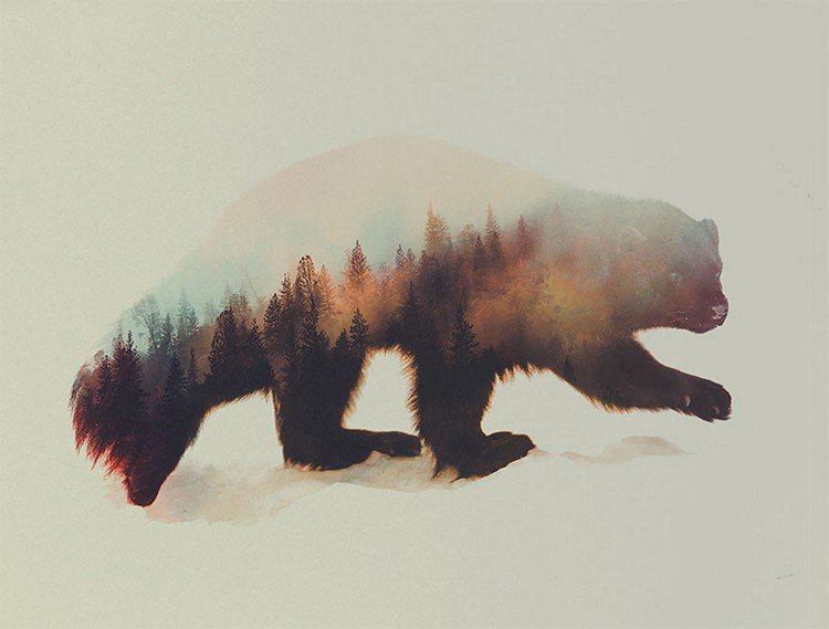 beautiful doubleexposure photos blend wildlife with wild