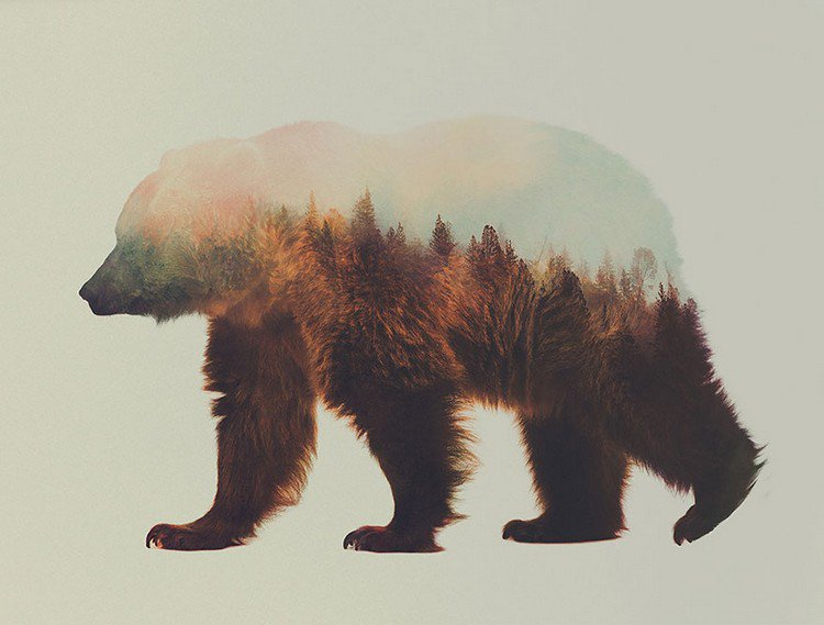 double exposure bear trees