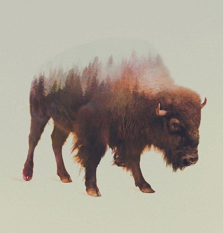 double exposure bison