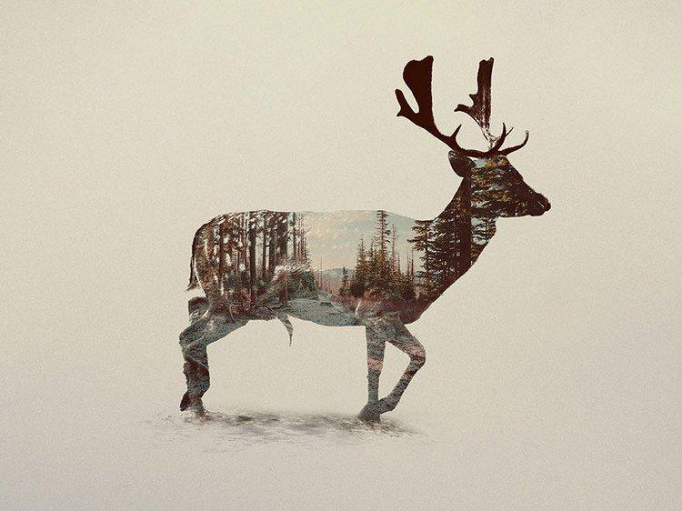 double exposure deer