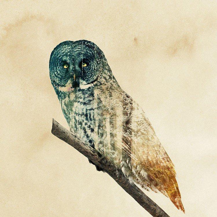 double exposure owl branch