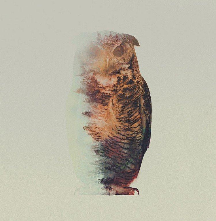 double exposure owl white background