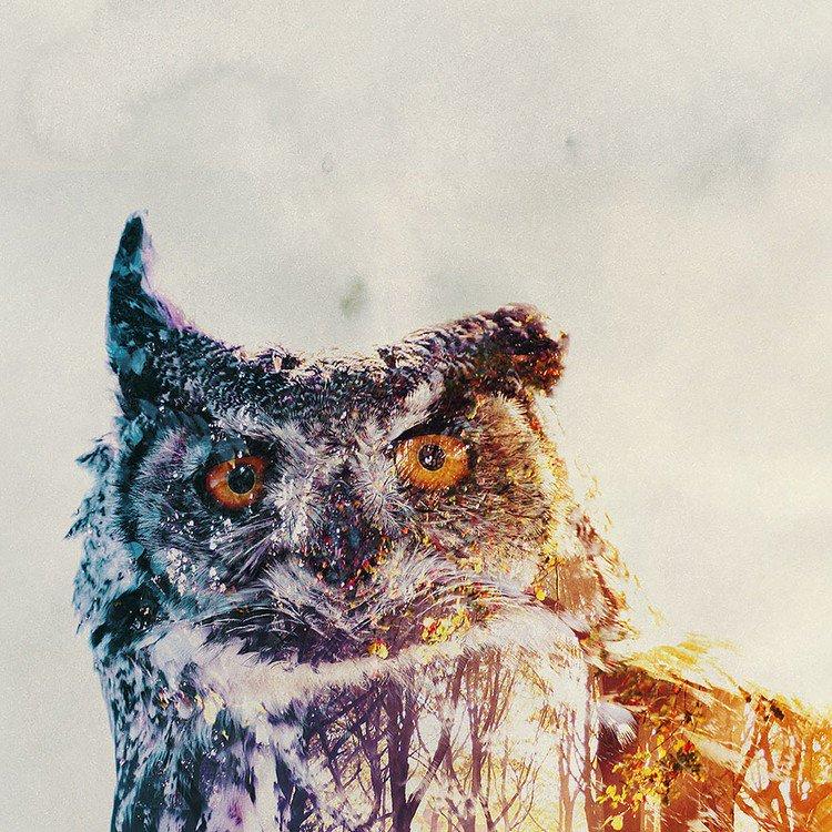 double exposure owl