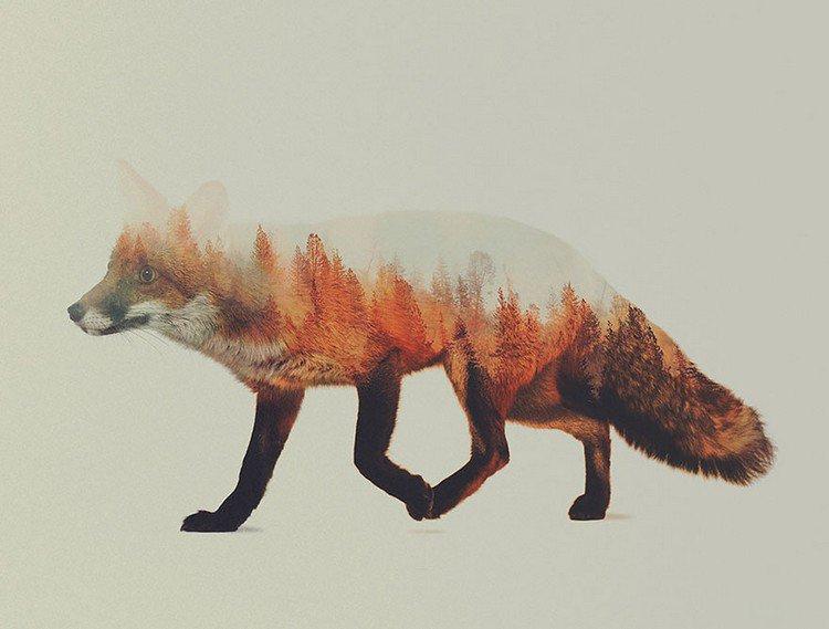 double exposure red fox trees