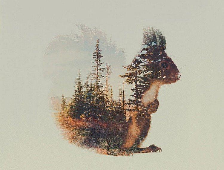 double exposure squirrel