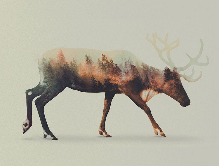 double exposure stag trees