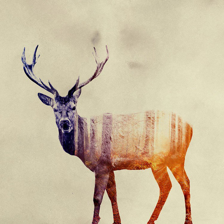 double exposure stag
