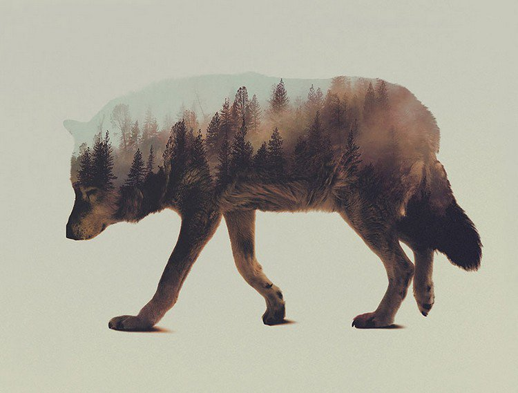double exposure wolf forest