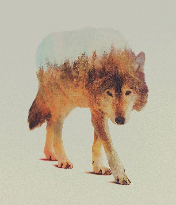 double exposure wolf trees