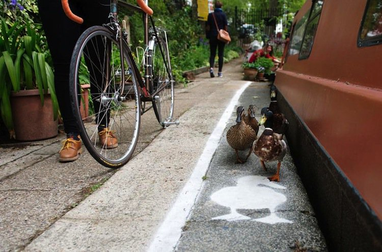 duck-lane-two