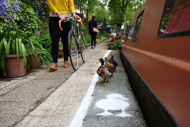duck-lanes-two