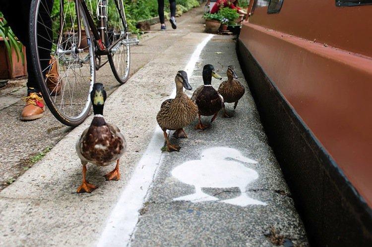 duck-lanes