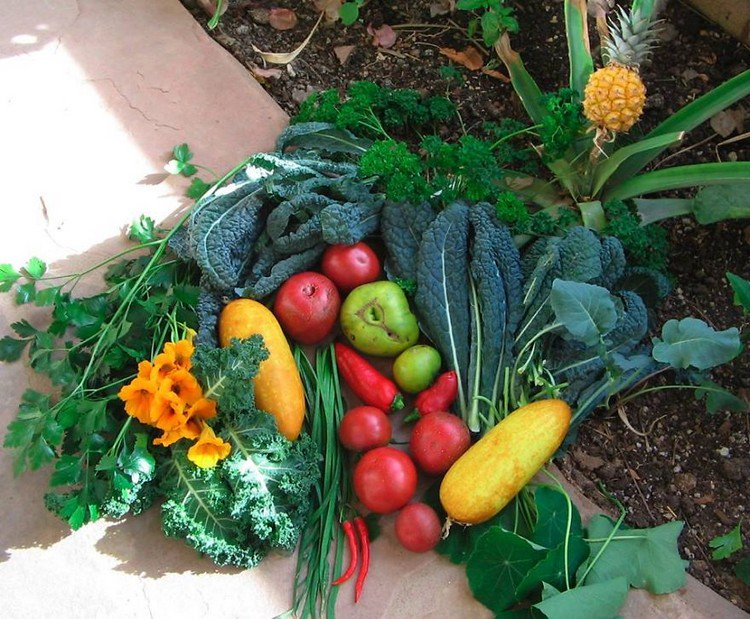 earthship fruit veg