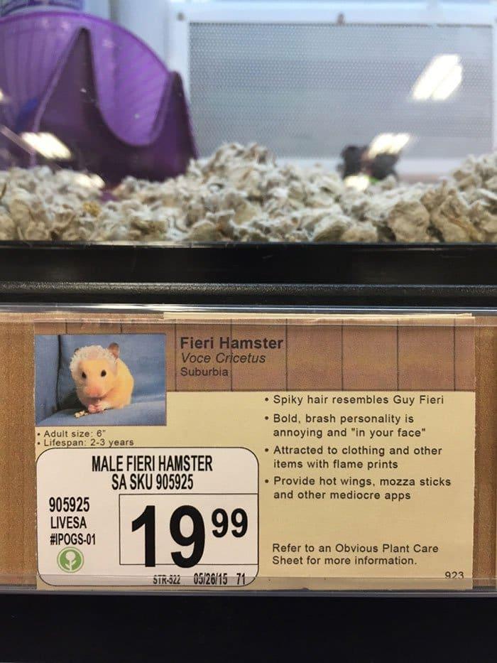 fieri hamster info