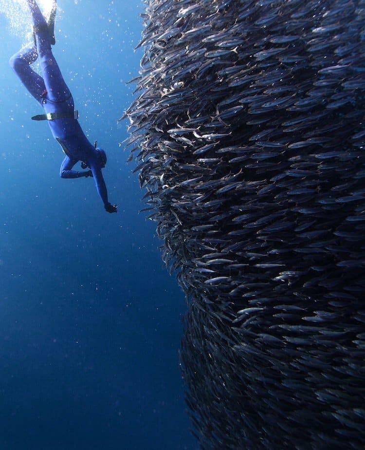 fish-bait
