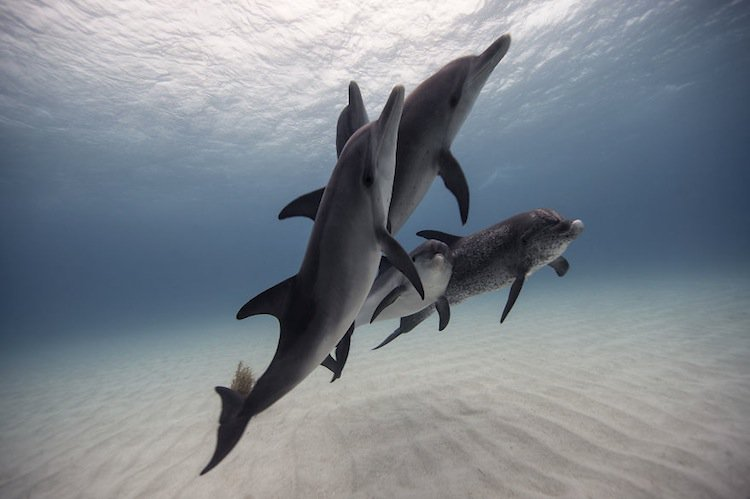 fish-dolphins