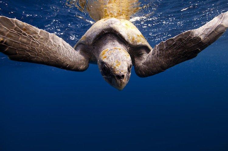 fish-turtle