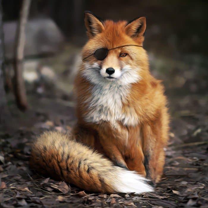 fox eyepatch