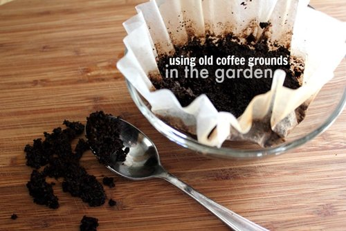 15 awesome gardening tips for the budding horticulturist Coffee grounds for garden
