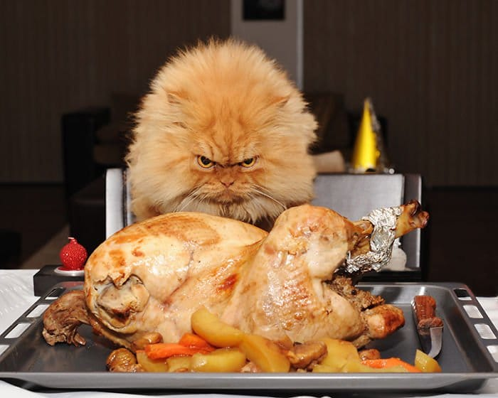 garfi chicken