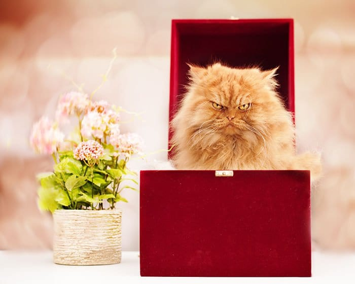 garfi red box flowers