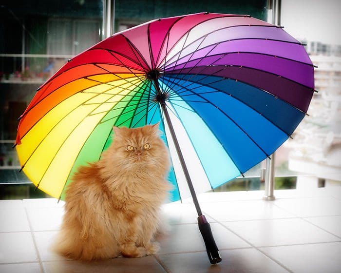 garfi umbrella