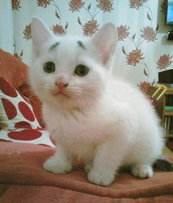 gary-kitten-brows