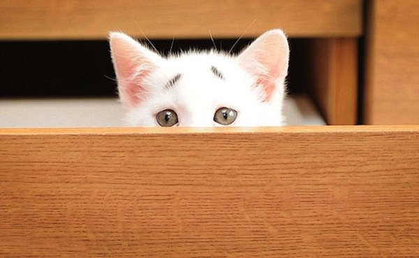 gary-kitten-eyes