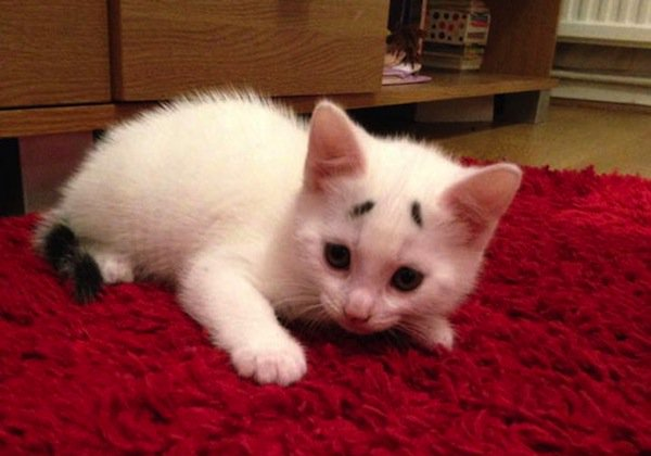 gary-kitten-red