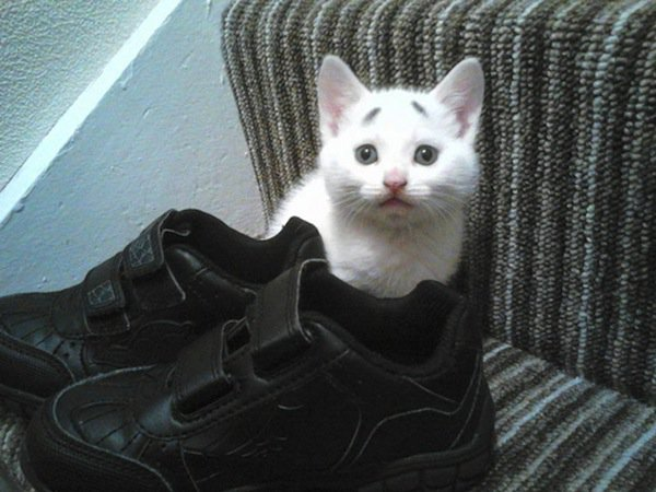 gary-kitten-shoes